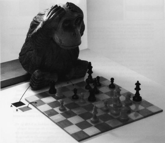 monkey looking at the chess board.png